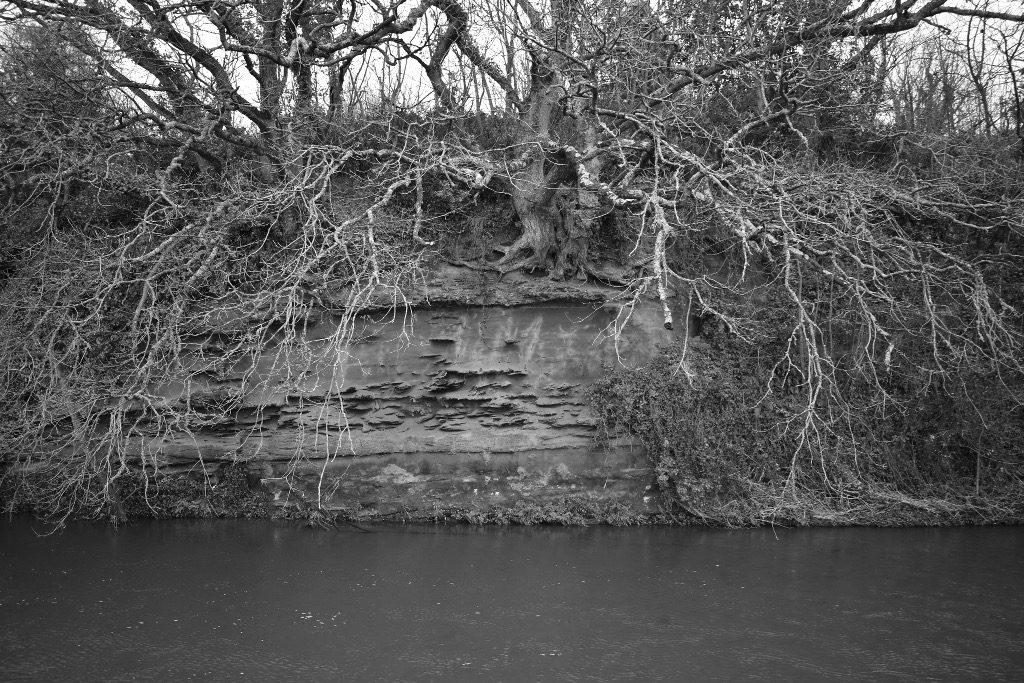 A tree on the banks of the River Otter. This image was the basis of the disc artwork for A Rising Tide by the Matt Palmer Band. Photograph by Matt Palmer.